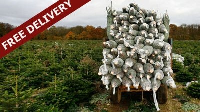 Free Christmas Tree Delivery