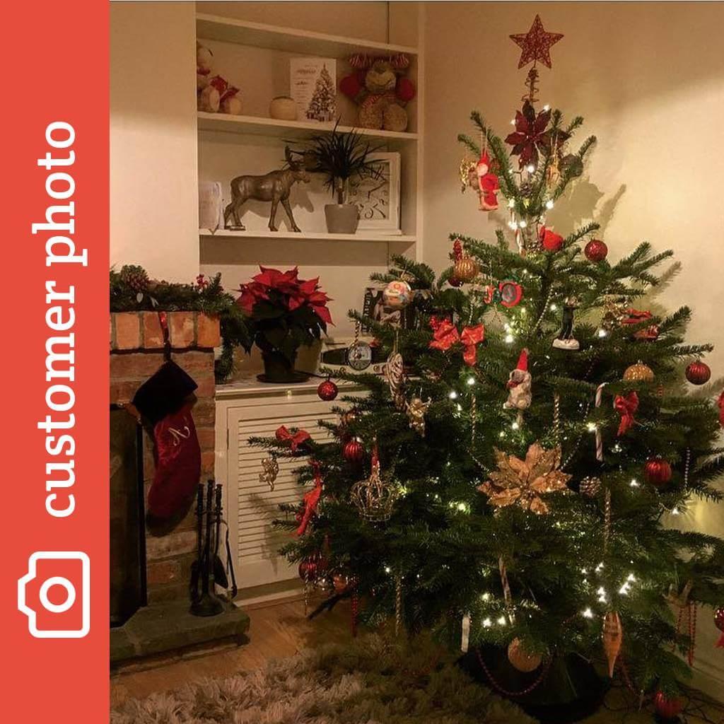 98bda32cdd4 Buy Nordman Fir Christmas Trees Online - Send Me a Christmas Tree