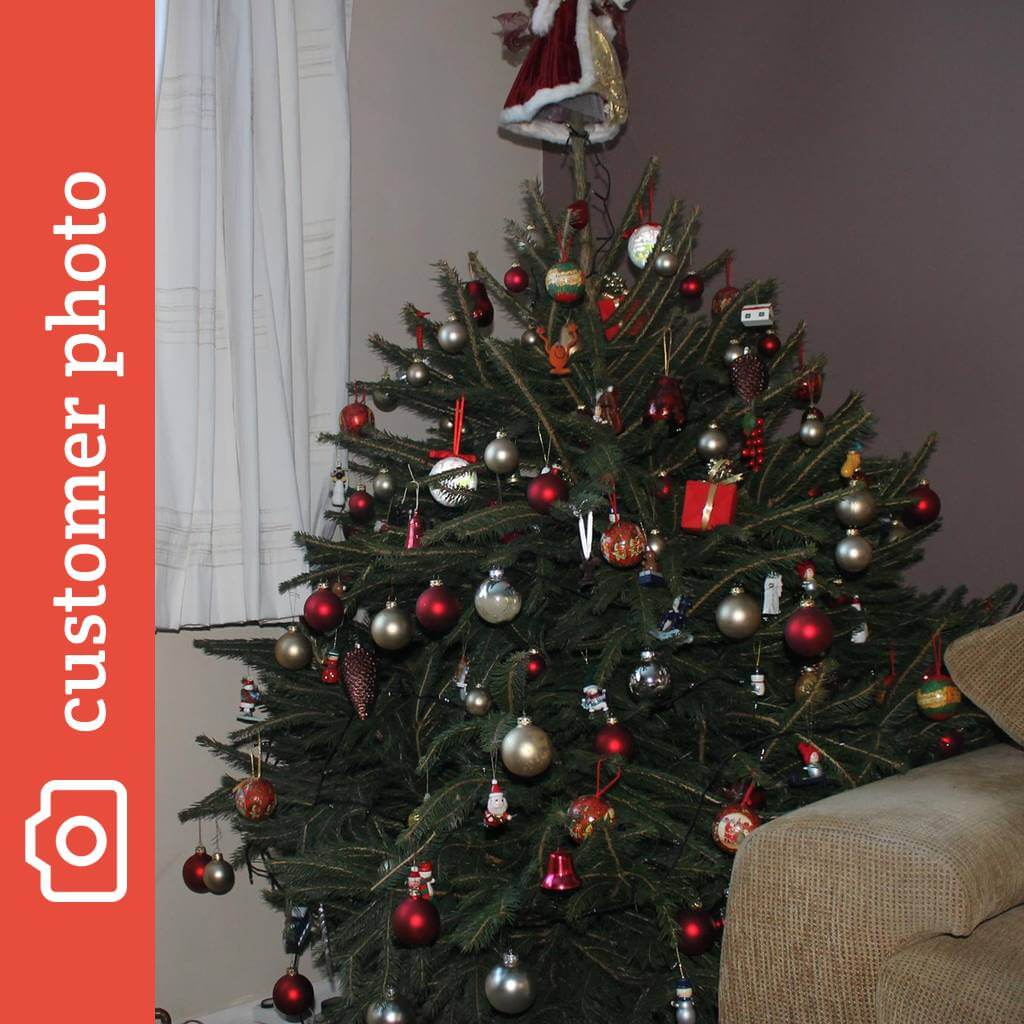 Buy Norway Spruce Christmas Trees Online - Send Me a Christmas Tree