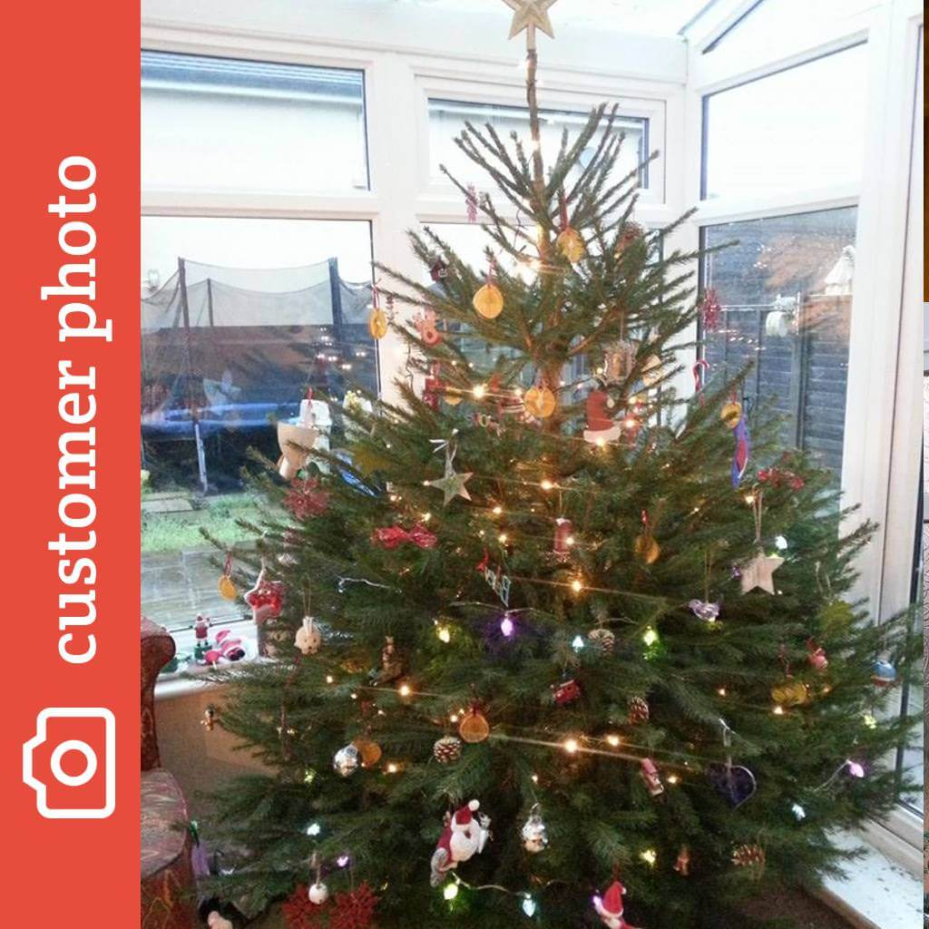 Christmas Tree Pictures.Buy Norway Spruce Christmas Trees Online Send Me A Christmas Tree