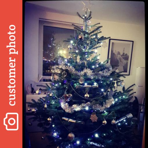 nordman fir instagram