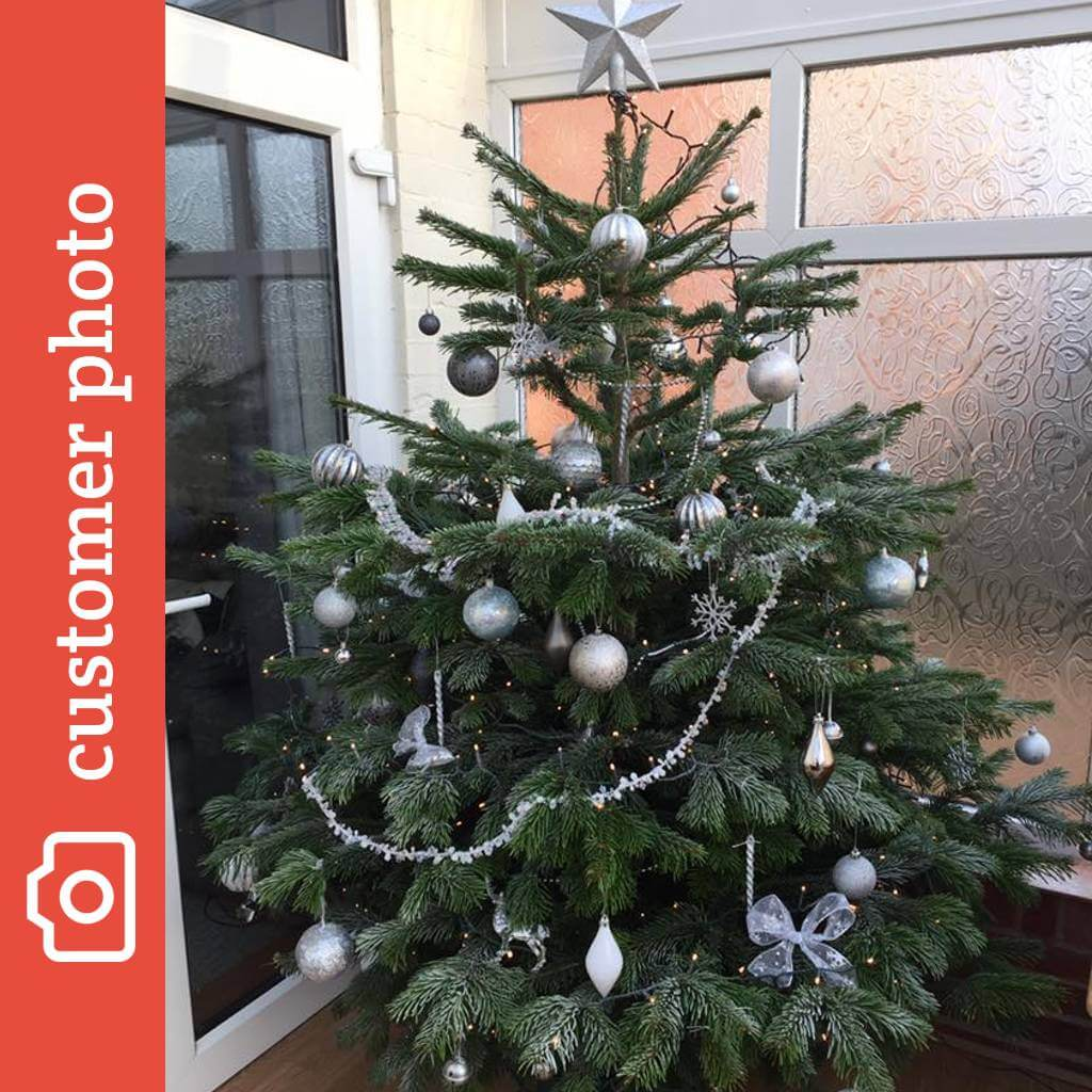 Christmas Tree Picture.Buy Nordman Fir Christmas Trees Online Send Me A Christmas Tree
