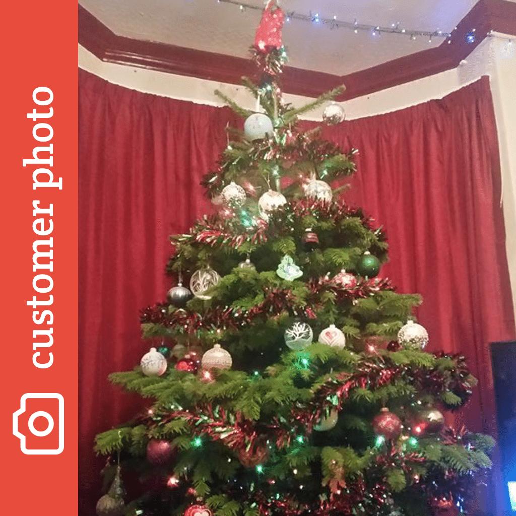 nordman fir - Christmas Trees Online
