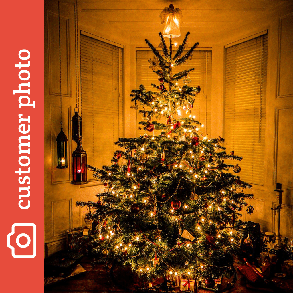 Images of what country did christmas trees originate from for How did the christmas tree come about