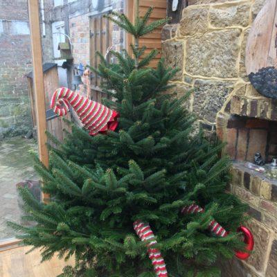 elf legs christmas tree