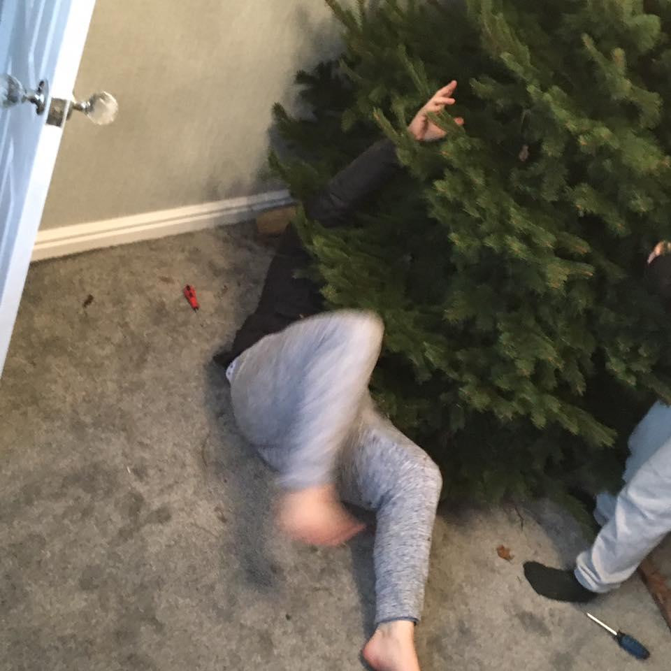 Leon's Blue Spruce